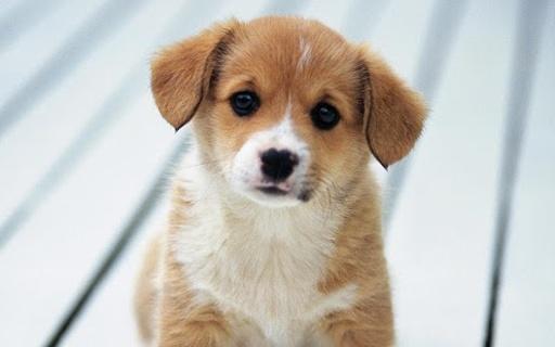 这些可爱的小狗动态壁纸将你振作起来
