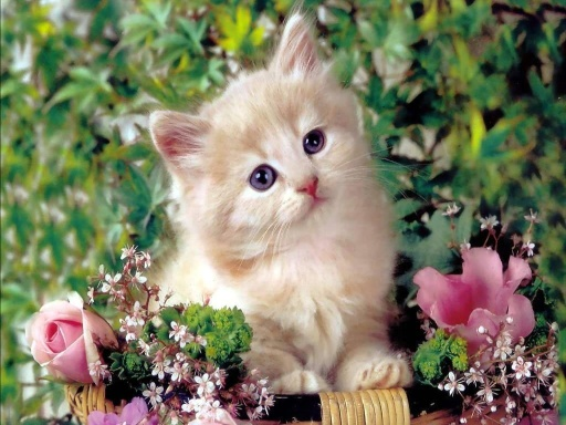 伟大的品种和可爱的猫!
