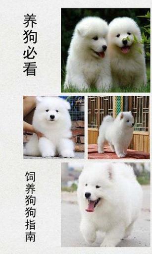 养狗必看:饲养狗狗指南