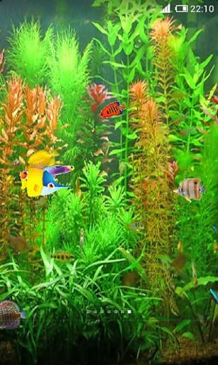 养鱼动态壁纸截图2
