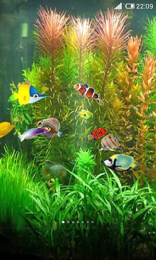 养鱼动态壁纸截图3