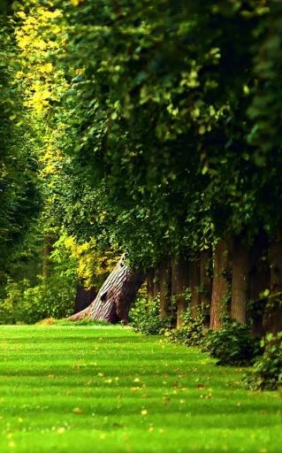 春天树木,秋天的树木覆盖着阳光夏季树木