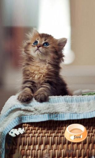 黛西猫主题(女生萌宠桌面锁屏壁纸)|玩工具App免費|玩APPs