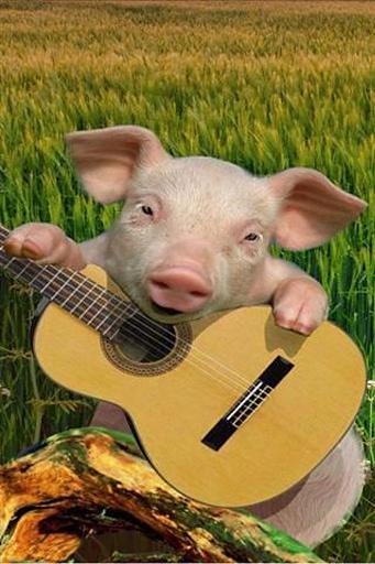 唱歌的猪截图0