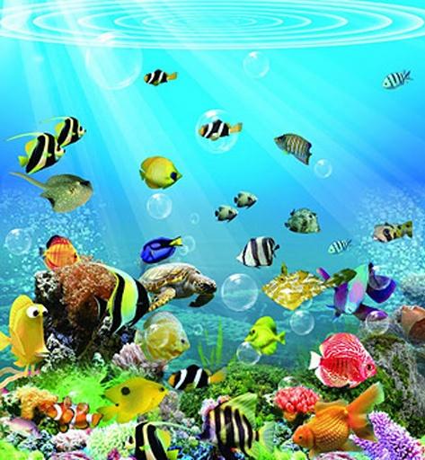 你可以选择你喜欢海底世界图片作为您的手机壁纸折叠,让您的手机更加