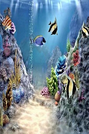4D海底世界壁纸下载 4D海底世界壁纸安卓版下载 4D海底世界壁纸 1.0图片