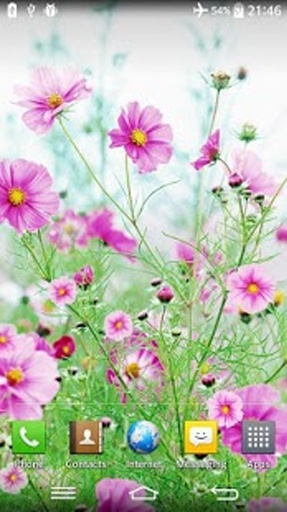 甜美花朵动态壁纸