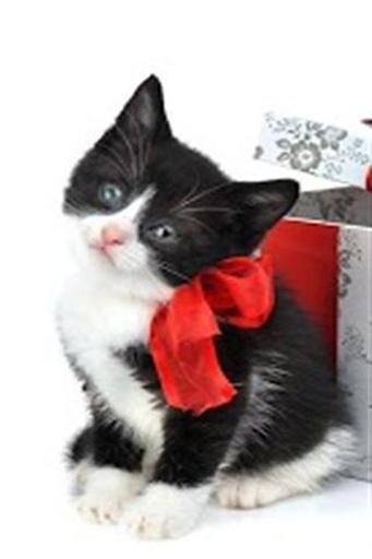 可爱的小猫动态壁纸下载