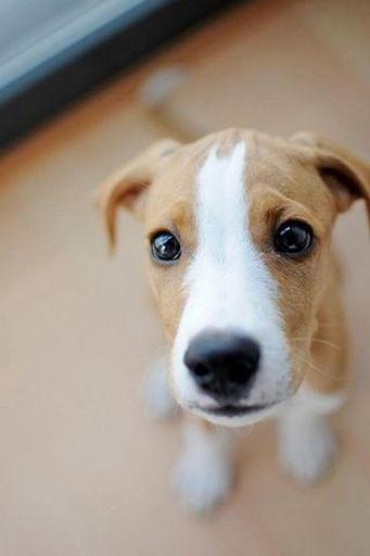 世界上最可爱狗