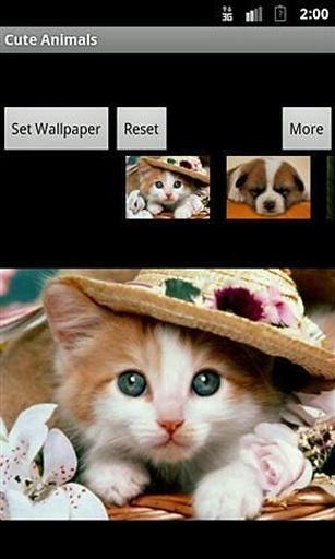 可爱动物壁纸