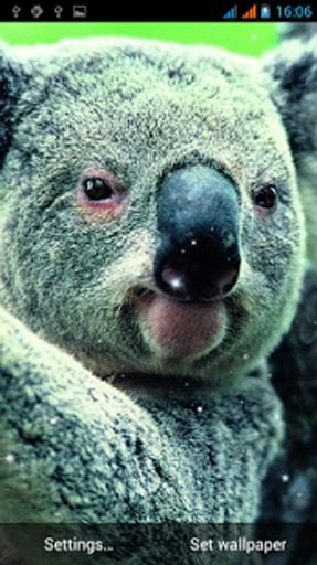 可爱的动物根本不是熊