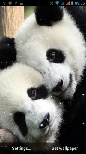 选择熊猫睡觉的动态壁纸