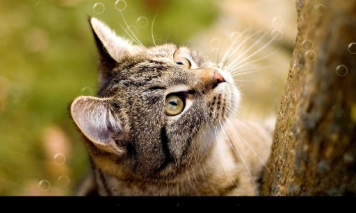 超可爱猫咪动态壁纸 截图6