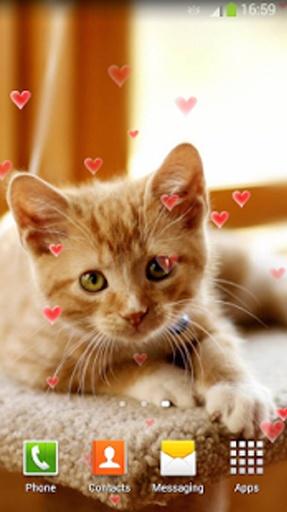 可爱小猫 动态壁纸