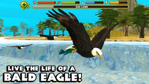 老鹰模拟器