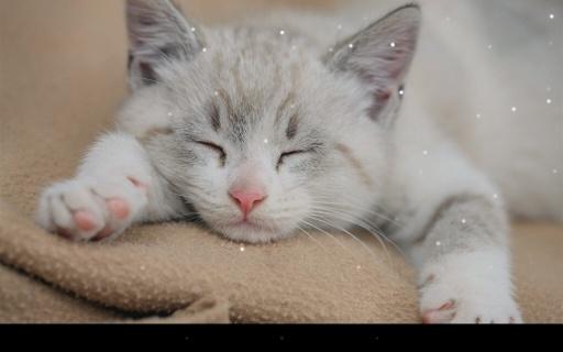 瞌睡猫咪动态壁纸