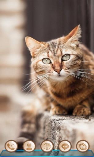 宝软3D主题-转角遇见猫