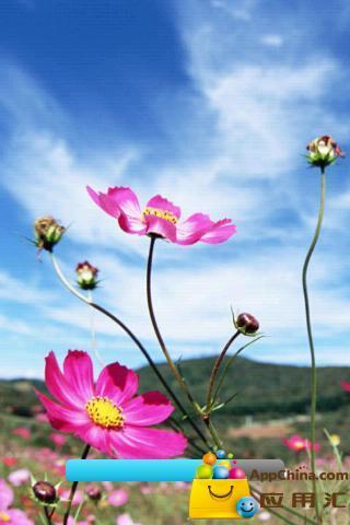蓝天与鲜花壁纸
