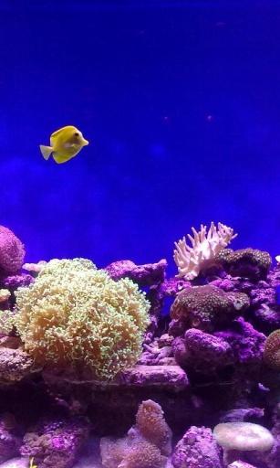 壁纸 海底 海底世界 海洋馆 水族馆 桌面 307_512 竖版 竖屏 手机