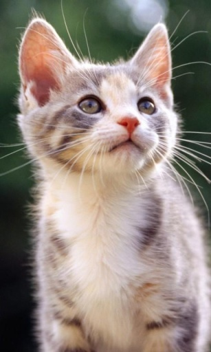 3d小猫高清动态壁纸