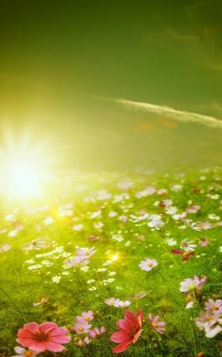 春天的草地动态壁纸