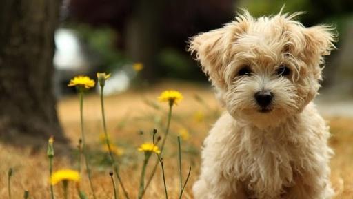 可爱的动态壁纸为您提供最可爱的小动物,这将