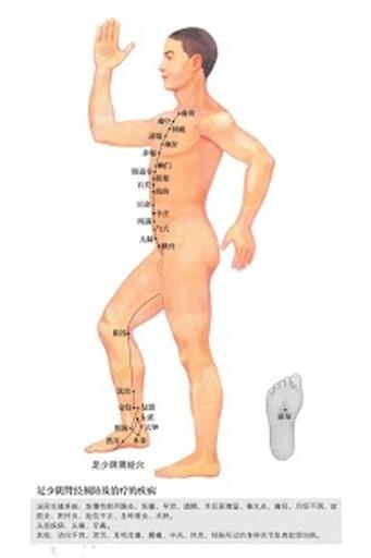 人体十二经络走向图