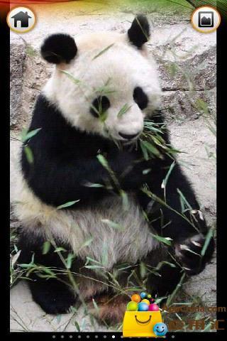熊猫拼图下载_熊猫拼图安卓版下载