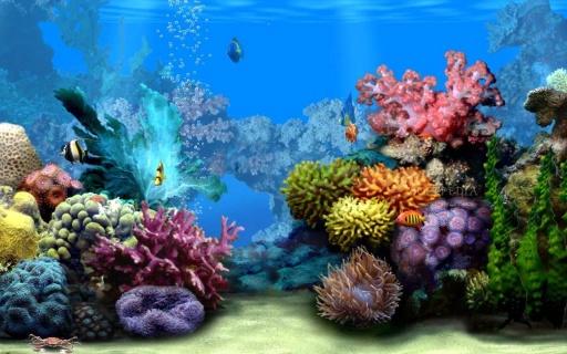 在android手机主题海洋水族馆高清壁纸多颜色的鱼