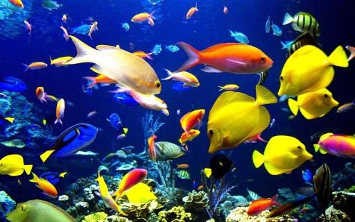 在android手机主题海洋水族馆高清壁纸多颜色的鱼漂浮的珊瑚和水下
