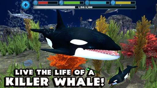 虎鲸模拟器截图0