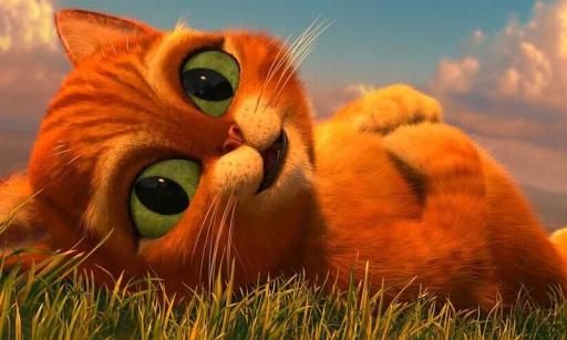 超呆超萌可爱宝贝猫2