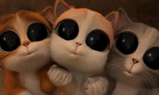 超可爱萌猫