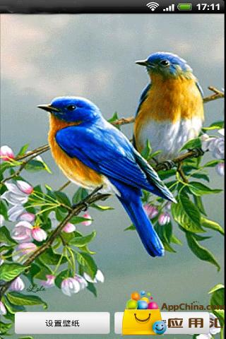 动态鸟类壁纸