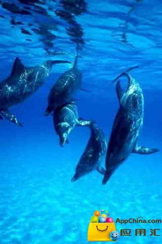 美丽的海豚动态壁纸