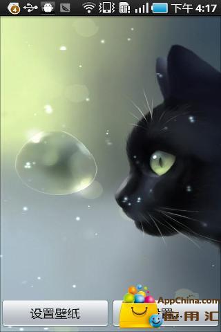 好奇猫咪动态壁纸