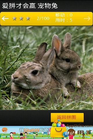 爱拼才会赢 宠物兔截图3