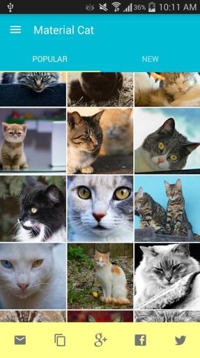好多猫:Material截图3