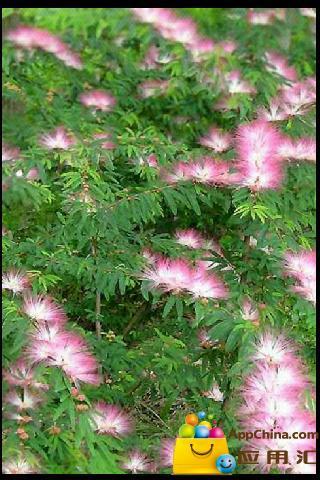景观植物大全下载_景观植物大全安卓版下载图片