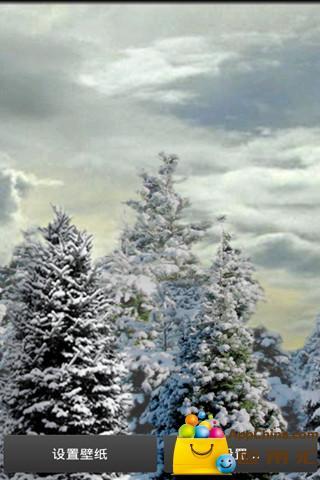 雪松动态壁纸