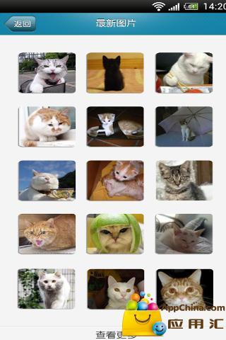 玩免費生活APP|下載猫咪有约 app不用錢|硬是要APP