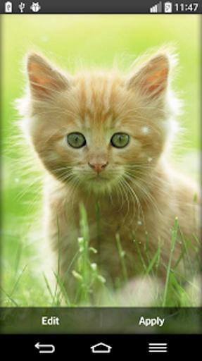 我们的甜蜜背景图片会放一个你脸上的笑容,每当你看看你的屏幕!