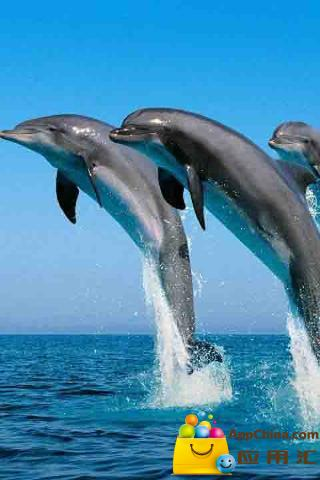 3d美丽的海豚跳跃高清动态壁纸 3d海豚动态壁纸 介绍 3d海豚动态壁纸