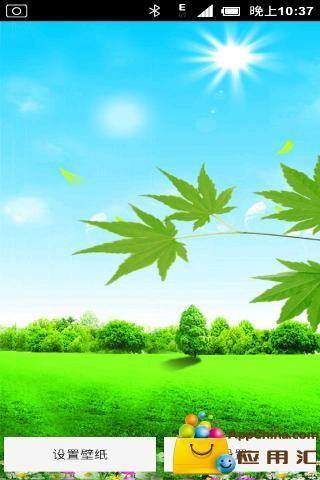 绿色阳光动态壁纸