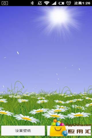 唯美雏菊动态壁纸