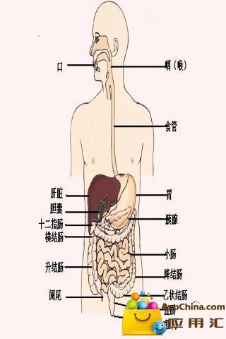 解剖学习指南