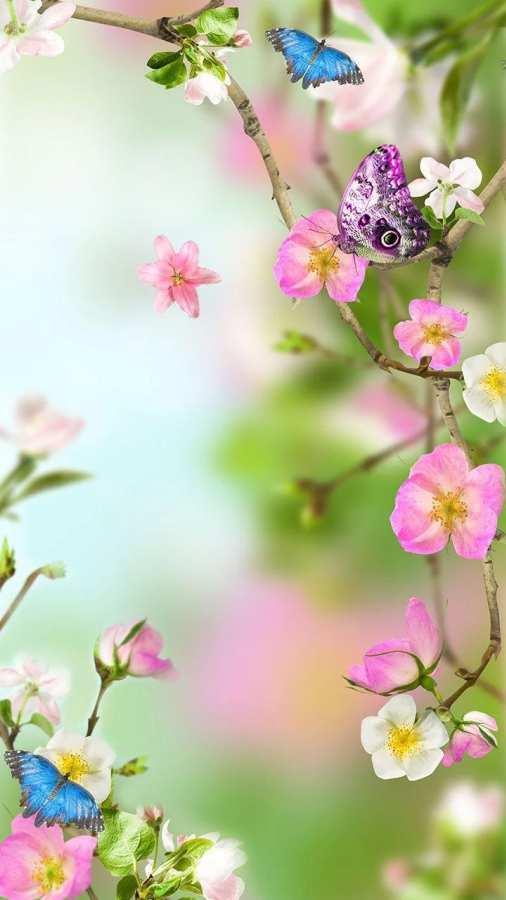 花卉动态壁纸截图1