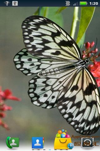 蝴蝶動態壁紙