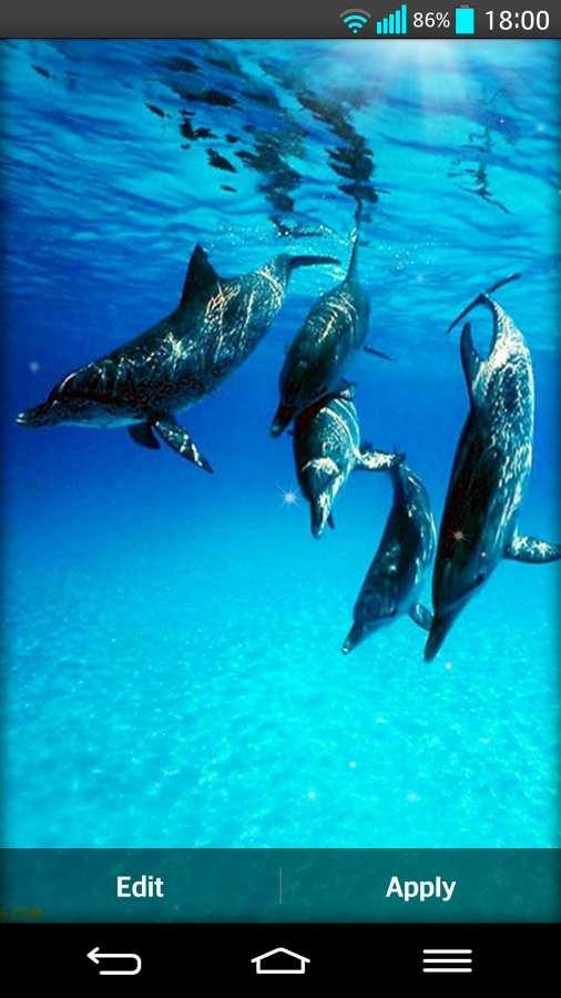 海豚 动态壁纸截图0