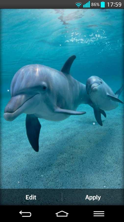 海豚 动态壁纸截图1